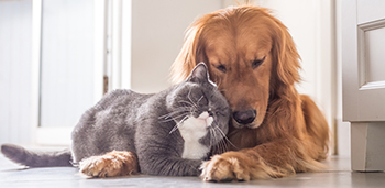 Cats-Dogs-Living-Together