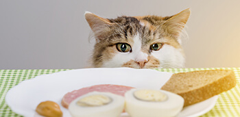 Cat Looking at Food on Plate