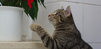 Cat Looking at Plant